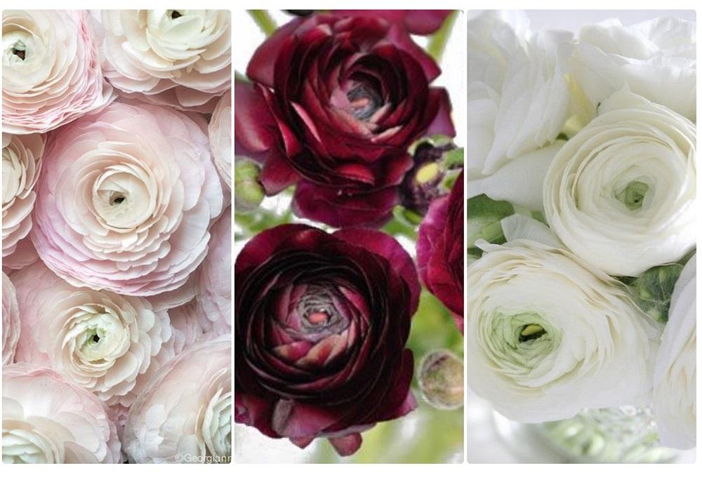 Pełniki/Jaskry/ Ranunculus Występują od jesieni do początków wiosny. Jaskier występuje w wielu kolorach. Można ułożyć z nich wiązankę klasyczną, cudnie wyglądają także w bukietach rozwianych, polnych. Bukiet z jaskrów mówi – drżę na Twój widok, promieniejesz wdziękiem